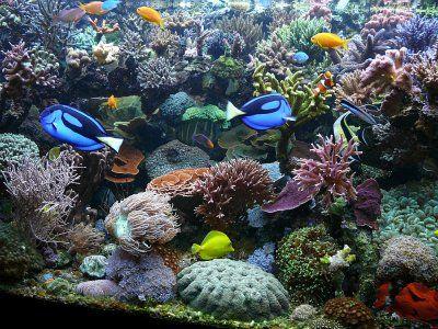Koralji...ljepota osuđena na propast