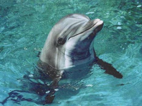 Delfini mogu pomoći ljudima