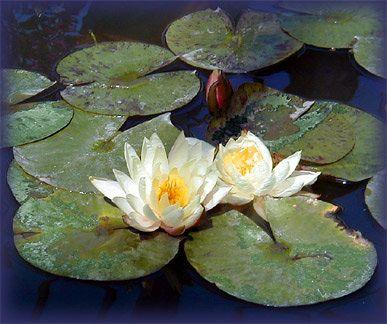 Koja je uloga gurua i života u ashramu?