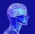 Fascinantne činjenice  i mitovi o našem mozgu