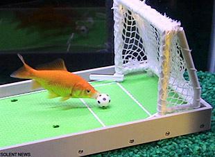 Najinteligentnija ribica na svijetu