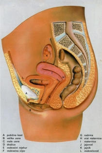 Čišćenje creva