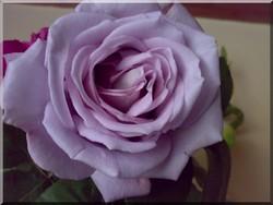 Ljubav, vrijeme i oluja ruža.