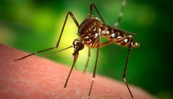 Zaštitite se od komaraca na prirodan način