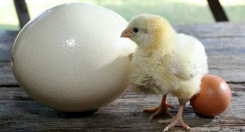 Online oklade za jaja - veliki hit