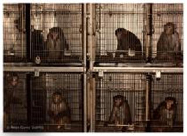 Šokantne slike eksperimenata nad životinjama