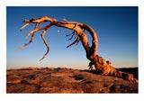 Sprijateljiti se s prirodom - P.Bosmans