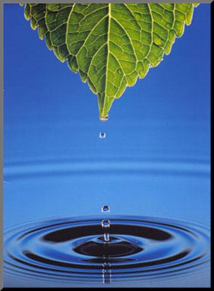 Budi Moja Voda