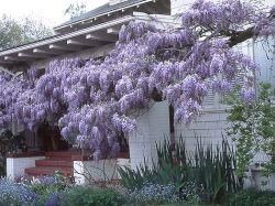 Penjačice - ukras vrta