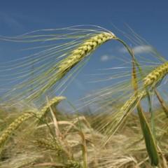 Odustaje se od biogoriva