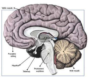 O mozgu i o univerzumu uma