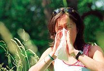 Šmrcavi zbog ambrozije