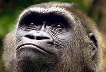 Sve duži popis ugroženih primata