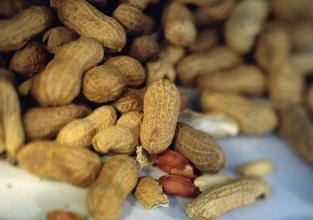 Kikiriki, kokice, sjemenke i koštice pomažu probavi