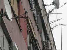 Zbog kiše stotine lastavica zaklon potražile i u stanovima