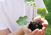 Kako do statusa ekoškole i koje uvjete treba zadovoljiti