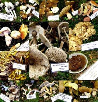 Otvorena izložba gljiva
