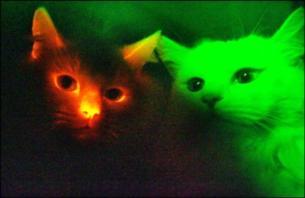 Svjetleći mačak