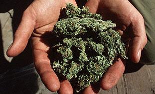 Pronađena zaliha marihuane stara 2700 godina