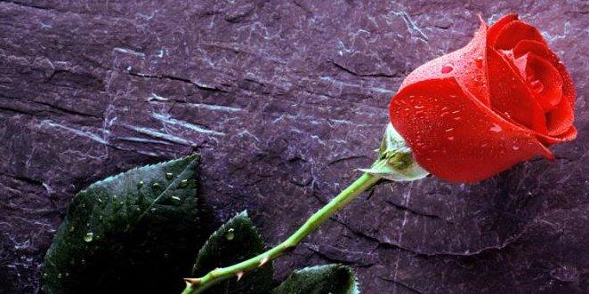 Muškarci oprez, cvijeće odaje vaše namjere!........