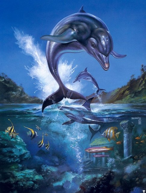 The beauty of Dolphins