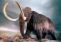 Znanstvenici dekodirali tajnu genoma mamuta