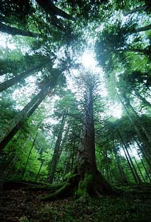 Disanje vas sjedinjuje sa izvorom životne energije