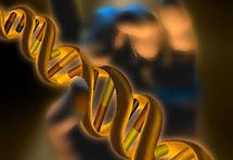Inteligencija - je li zapisana u tisućama gena?