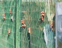 Zatvorenici u Šibeniku sade cvijeće