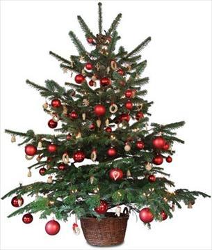 Sve manje Austrijanaca kupuje božićna drvca
