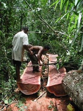 Hakeri pomažu ilegalnu sječu brazilske prašume