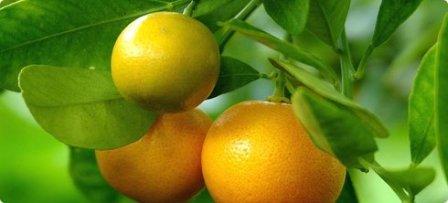 Mandarine, mandarinke, tangerina :)