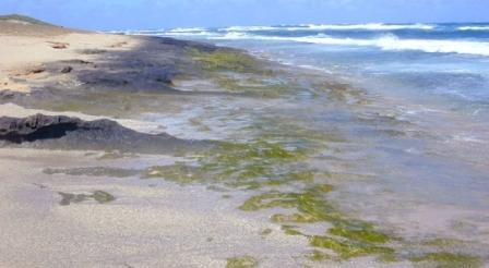 Otkriće znanstvenika: Zelene alge spasit će svijet od globalnog zatopljenja