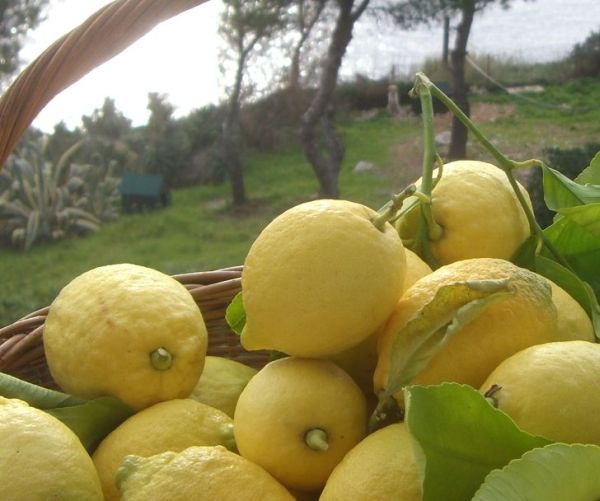 Vrhunski vitamin C
