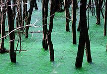 Zašto je jezero Ponikve pozelenilo?