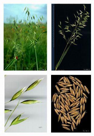 Zašto su ekološki prehrambeni proizvodi skuplji od konvencionalnih?