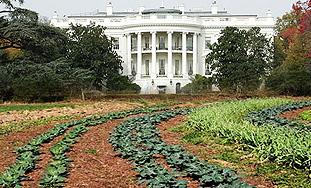 Prva dama odlučila:Voće i povrće u vrtu Bijele kuće!