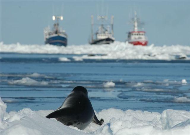 Poziv na prosvjed za tuljane! Potpisite peticiju!
