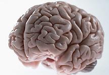 Deblja glava - veća inteligencija