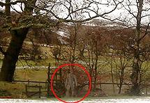 Britanac kamerom snimio duha
