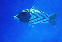 Robo-riba u borbi protiv zagađenja