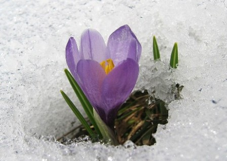 Uredničko: Dan po dan - Sutra su obećali snijeg...
