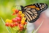 Alergijski rinitis - kako si olakšati na prirodan način?