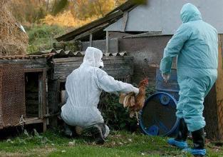 WHO: Situacija je ozbiljna- Svinjska gripa