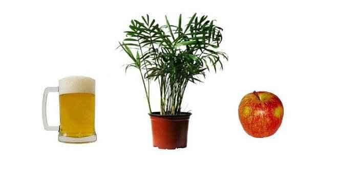 Nahranite svoje biljke pivom i jabukama