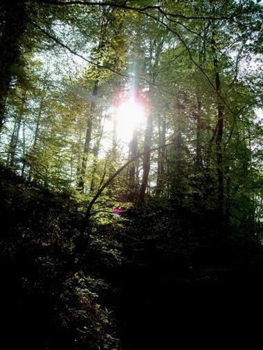 Miris šume