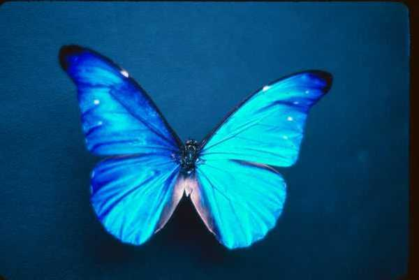 Butterfly: The Mysteries of Transformation