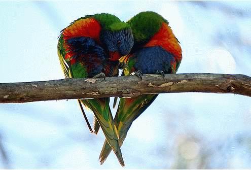 ... kad muškarac (napokon) progovori o ljubavi ...