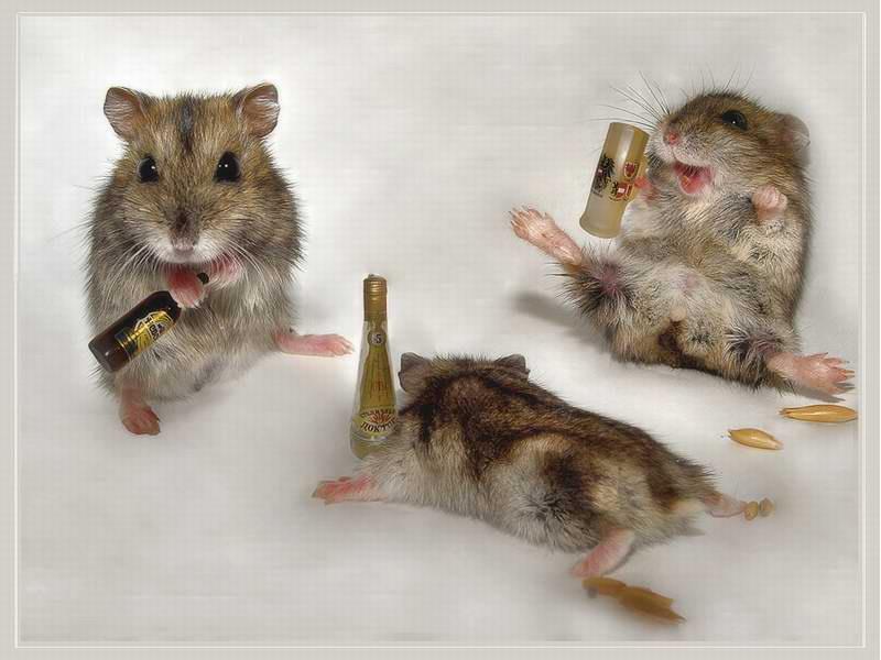 Slučajno stvorili miševe mutante koji cvrkuću