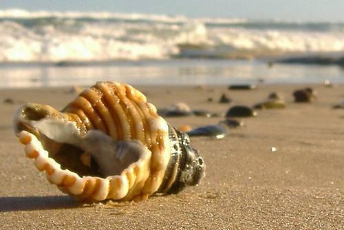 školjka na plaži, more u daljini, pješčana plaža